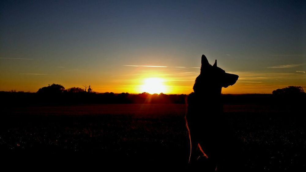 Dog Dogs Sitting Sitting Dog Sunset Uk Countryside Sky Silhouette Sunset Travel Destinations Statue Sculpture No People Nature Outdoors Sky Day Mammal