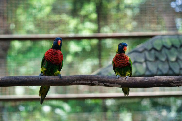 Two birds perching on a bird