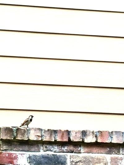 Eyeemphoto Bird Wall Building Nature
