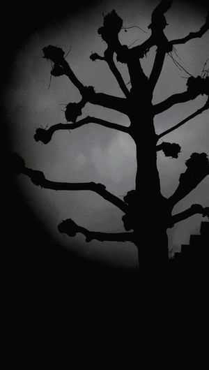 tree Black And White Beauty In Nature Silhouette Shadow No People Outdoors