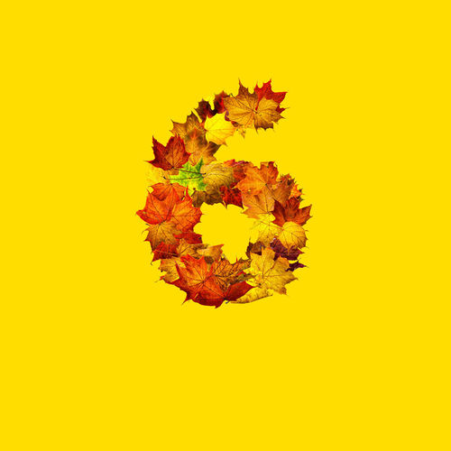Close-up of autumn leaves on yellow background