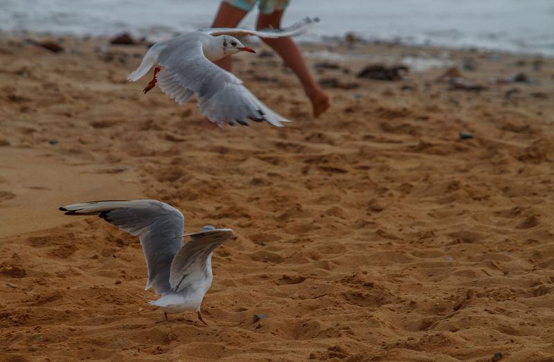 Birds flying at beach
