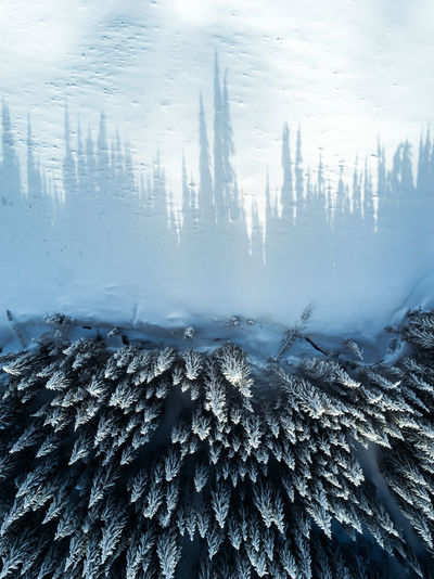 Aerial view of snow covered trees during winter