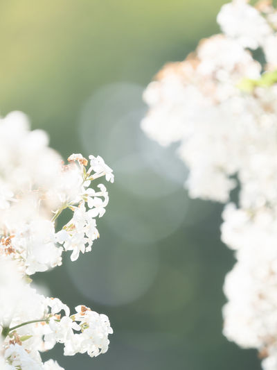 Animal Animal Themes Animal Wildlife Animals In The Wild Beauty In Nature Cherry Blossom Close-up Flower Flower Head Flowering Plant Focus On Foreground Fragility Freshness Growth Insect Invertebrate Nature No People One Animal Outdoors Petal Plant Pollination Springtime Vulnerability