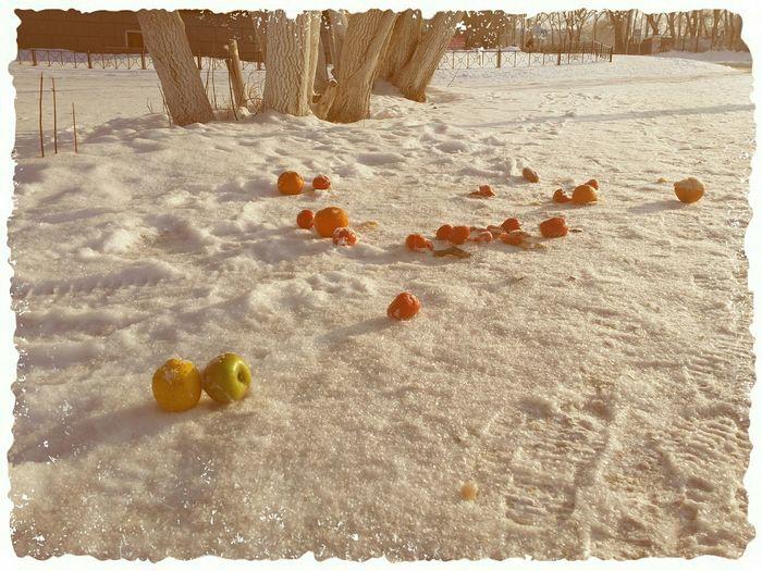 Фрукты на снегу Новосибирск Novosibirsk Street Photography зима