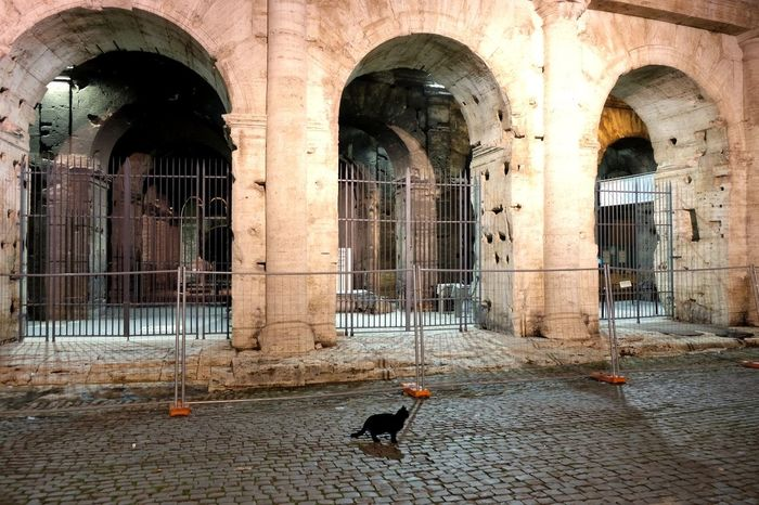 Rome 2017 Nero Claudius Caesar Augustus Germanicus🔥 Black Cats Matter Nerone Rome, Italy Colosseo Roma Cat Black Cat Cats Cats Of EyeEm Lonely Cat Streetcat Straycat Architecture Architecture_collection Streetview Streetphoto Streetlife Streetphotography Streetphoto_color Streetphotographer Architecture No People Outdoors Animal Themes