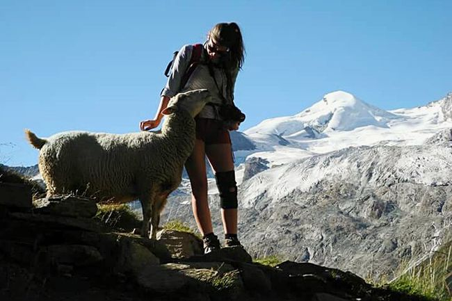 People And Places Mountain Clear Sky Adventure Travel Destinations Animal Animals Beauty In Nature Nature Zoology Wildlife One Animal Saas Fee Switzerland Suisse  Saasfee Mountain Range Clear Sky Snow