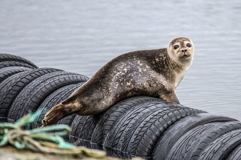 Portrait of sea on tires in sea