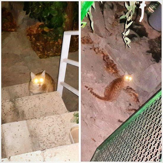 هه گربه ترسناک خوف شب cat eye چشم night چشم های این گربه خراب شده ... به فلاش حساسیت داره ... خودم عکس هارو دیدم ترسیدم