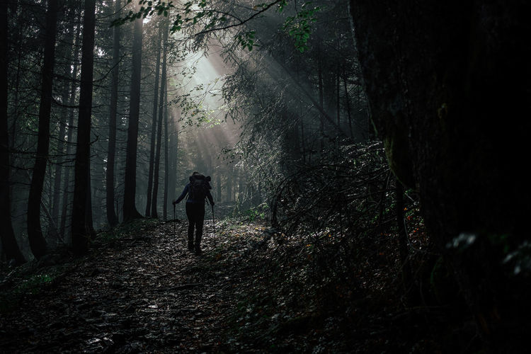Silhouette person standing by trees in forest during foggy weather