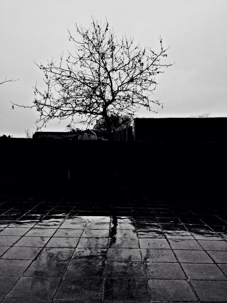 Rain Raindrops Trees Lonely Tree