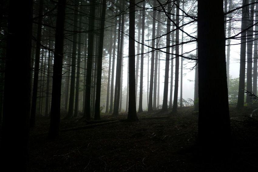Dark Forest Dark Forest Dark Darkest Fir Fir Forest Forest Forest Photography Forest Trees Nature No People Non-urban Scene Outdoors Scenics - Nature Tranquil Scene Tranquility Tree Tree Trunk Trunk WoodLand