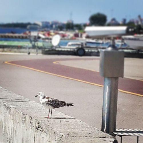 Istanbulisreadyfor2020olympics Seagull Gym Walking seaside asiancontinent istanbul