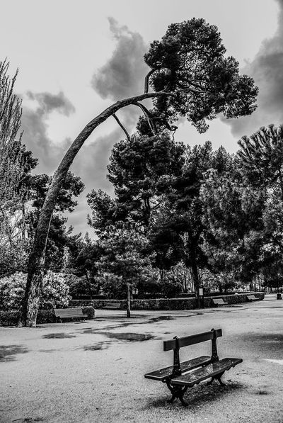 Tree No People Day Outdoors Madrid, Spain Park Parque  Nature Tree Street Foto Artistica Blanco Y Negro Artistic Photo Foto Creativa Black And White Artistic Photography
