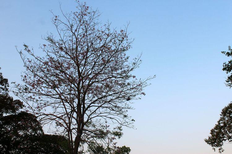 Yangon Myanmar Nature Photography Sky Trees Brunches Sunset Kandawgyi Park in Yangon, Myanmar