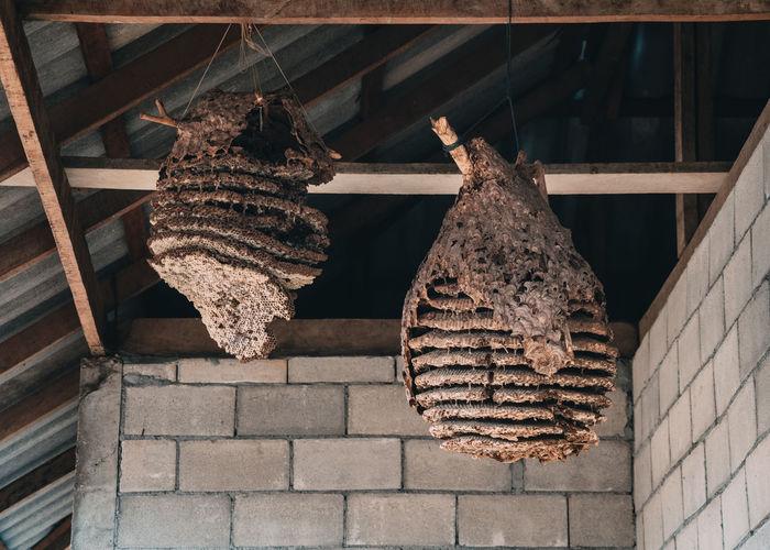 Low angle view of animal hanging on wall