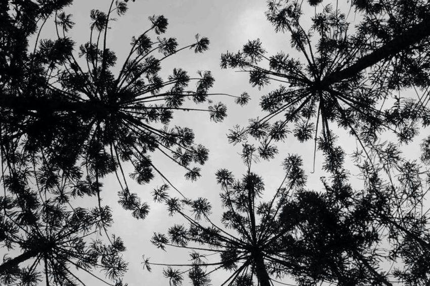 Spring Into Spring Hortoflorestal Camposdojordao