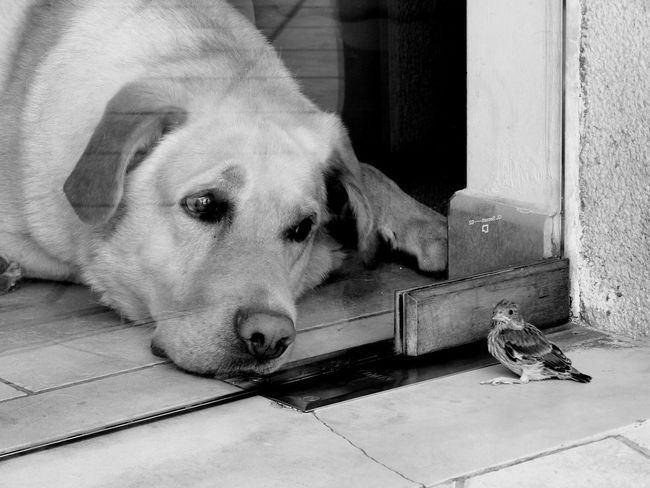 Animal Themes Behind The Glass Behind The Window Bird Black And White Black And White Photography Close-up Curiosity Curious Curious Dog Day Dog Dog Waiting Domestic Animals Friends Indoors  Looking Looking At Mammal No People One Animal Pets Portrait
