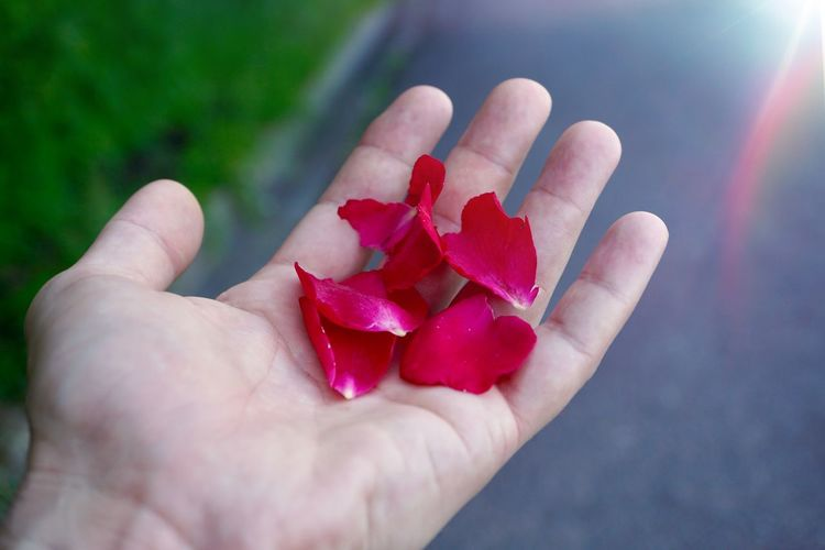 hand with a beautiful flower plant in the nature, man hand with flowers Hand Body Part Finger Flower Plant Petals Nature person Mountain Romantic Springtime Summer Bright Sunlight Love Human Hand Human Body Part One Person Holding Real People