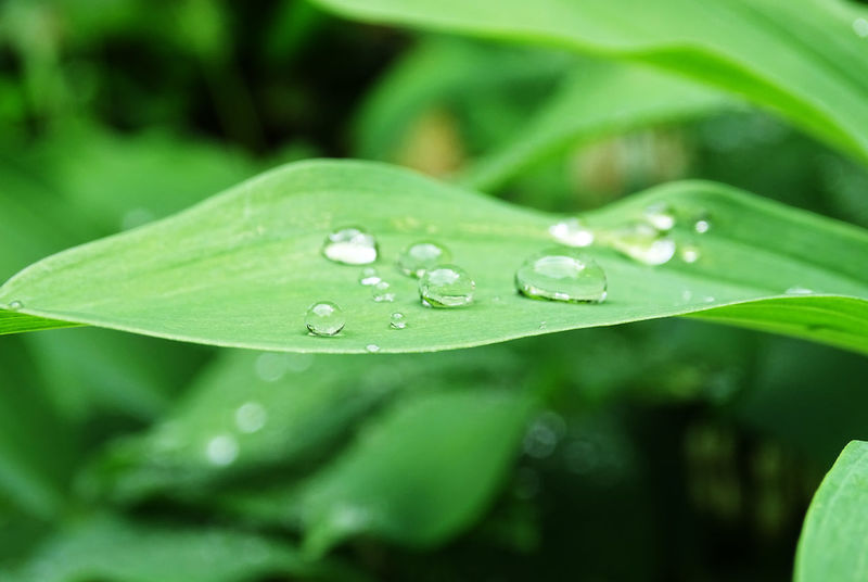 Water Leaf Drop Wet RainDrop Close-up Green Color Plant Grass Droplet Water Drop