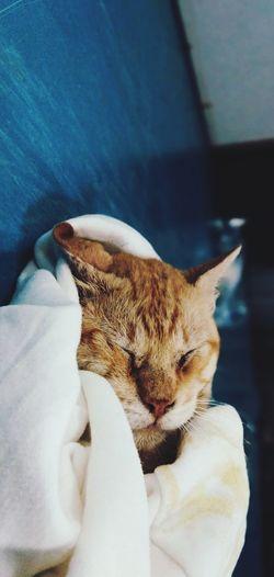 Close-up Cat At