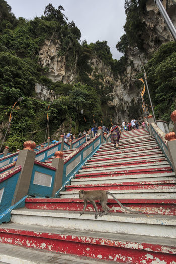 Kuala Lumpur, Malaysia: January 24, 2018: Monkey on the stairs leading up to the Batu Caves entrance in Kuala Lumpur Malaysia. Batu Caves are located just north of Kuala Lumpur,and have three main caves featuring temples and Hindu shrines. ASIA Batu Caves Kuala Lumpur South East Asia Lord Hanuman Lord Murugan Malaysia Religion