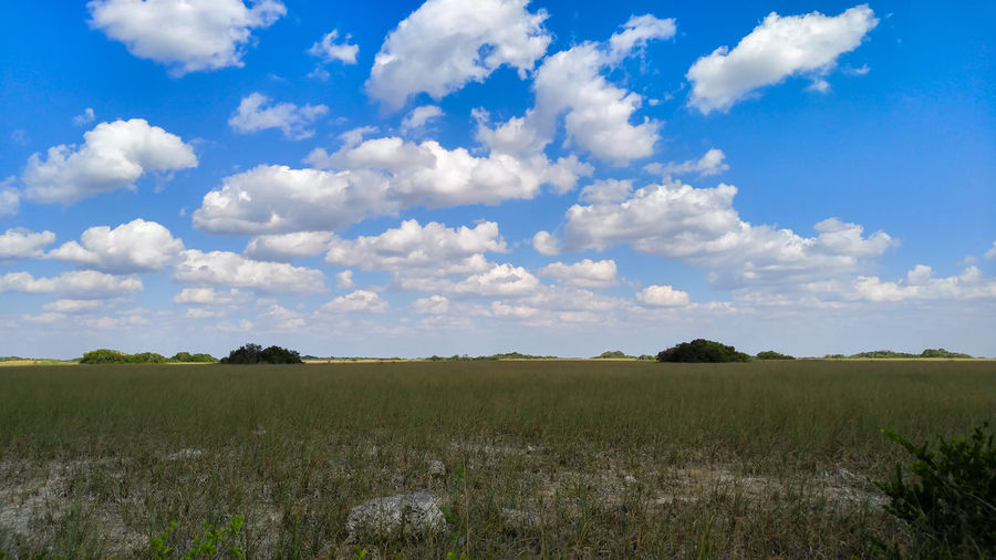 Scenic view of agricultural landscape against blue sky