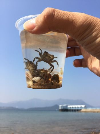 Human Hand Human Finger Human Body Part Holding Water Sea Small Crab IPhone Photography Crab Tsuistyle Photography Animal Themes Animal Wildlife Cup PLASTIC CONTAINER Plastic Cup