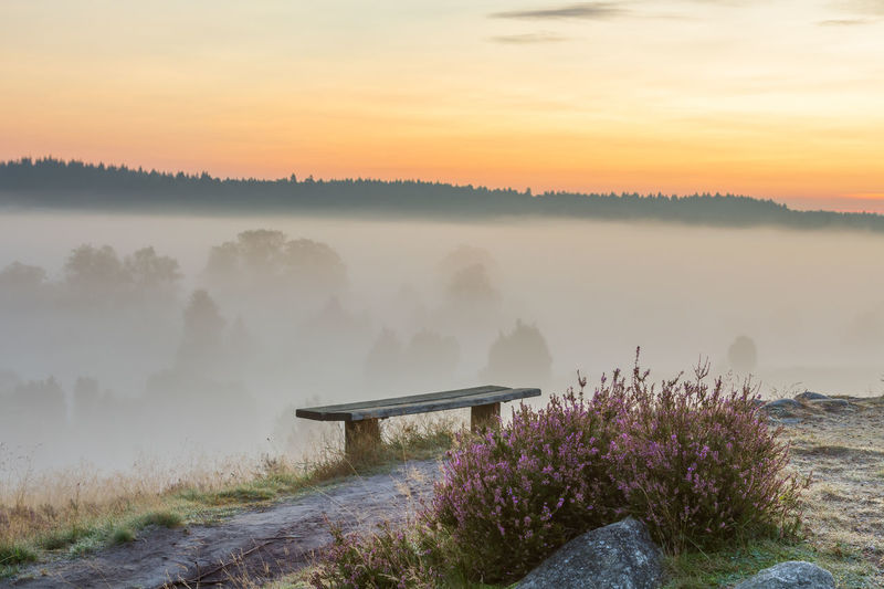 Fog in the early morning and first rays of sunshine in the nature park (nature reserve) Lüneburger Heide, Germany Morning Mist Fog Sunrise Early Morning View Into Land Seat Bench Violet Heide Blossom Blooming Sunset Beauty In Nature Yellow Orange Color Scenics - Nature Tranquil Scene Tranquility Tree Non-urban Scene Idyllic No People Hazy  Romantic Landscape Outdoors