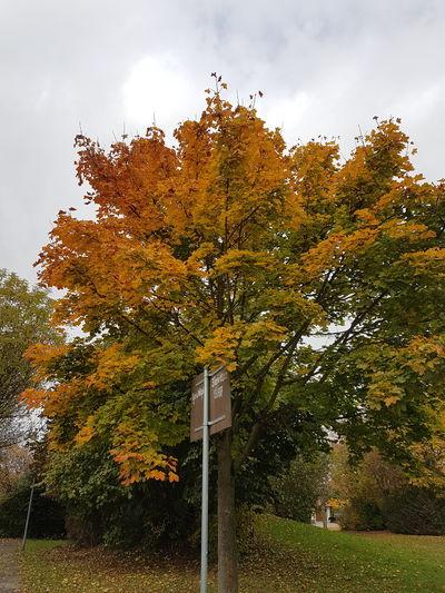 Tree Nature Outdoors No People Colour Autumn Colors Beautiful Nature Amazingcolours Ilikeit Amazingnature Naturephotography Beauty In Nature Amazingnaturepics Naturepicture