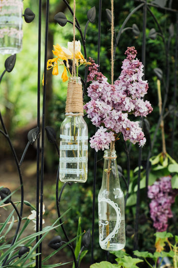 lily in bottles Bottle Art Lily Beauty In Nature Bottle Bottles Close-up Day Decoration Flower Flowers Focus On Foreground Fragility Freesia Freshness Growth Hanging Nature No People Outdoors Plant Purple Spring Flowers Wrought Iron