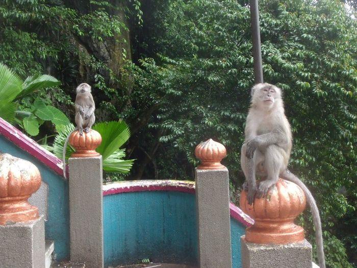 Batu Caves -Malaysia Batu Caves Monkeys No People Day Animal Themes Statue Sculpture Mammal Monkey
