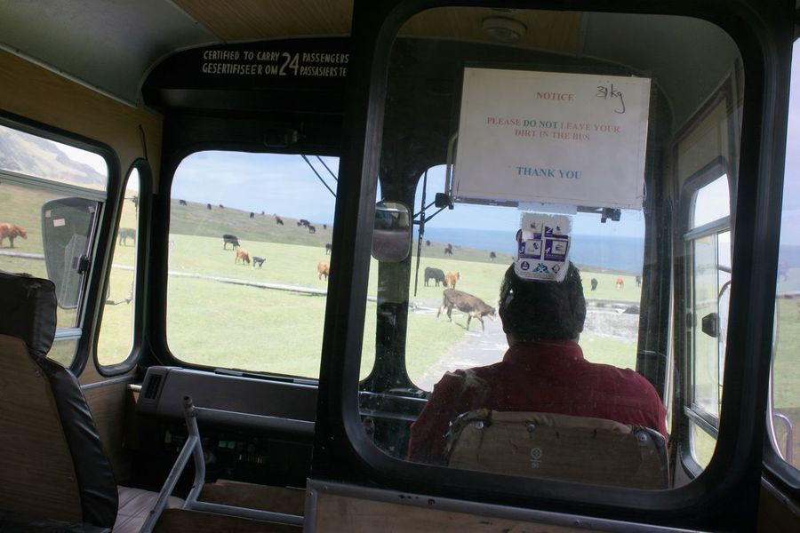 Tristan Da Cunha Bus Cattle Crossing Day Indoors  Land Vehicle Mode Of Transport Sitting South Atlantic Island Transportation Tristan Da Cunha Island Vehicle Interior Vehicle Seat Window