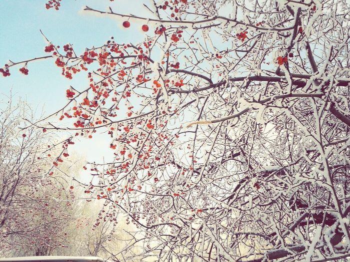Beautiful Nature Winter Berry