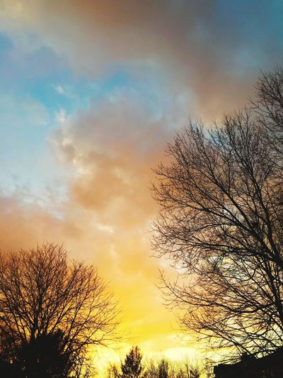 Sky Tree Cloud - Sky Bare Tree Beauty In Nature Nature Sunset No People Scenics Low Angle View Day