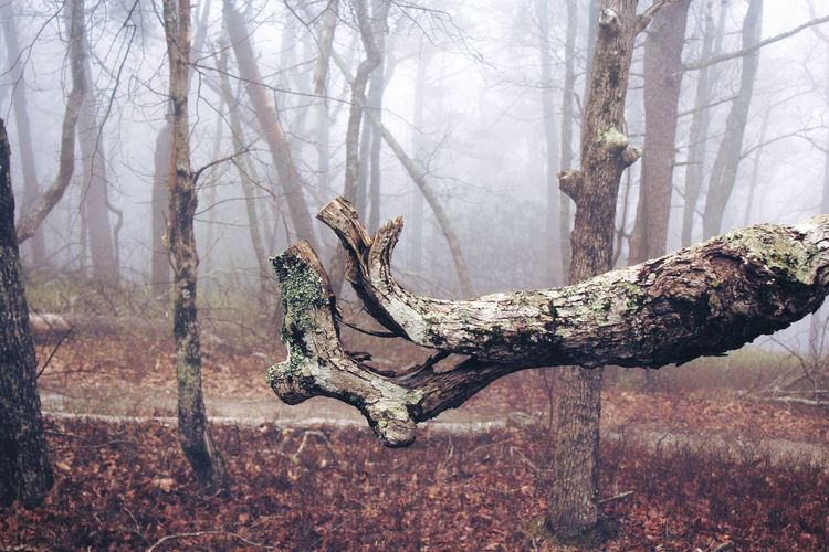 The Magic Mission Surreal Weird Tranquil Scene Fog WoodLand Beauty In Nature EyeEm Gallery Photography Nature Photography EyeEm Nature Lover Canonphotography Capture The Moment The Week Of Eyeem Weirdtrees
