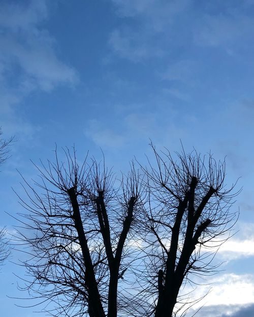 Sky Nature Low Angle View Growth Bare Tree No People Outdoors