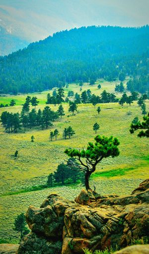 Showcase July The Rocky Mountains Trip To The Mountains Beautiful View Peaceful Escaping The City The Rocky Mountains In Colorado Estes Park, CO Enjoying Life Relaxing Best Landscape Photos Best Photos Online Landscapes Best Of EyeEm Eyeem Market EyeEm Nature Lover Mountain Life Colorado Photography Colorado Attractions Best Vacation Spots In Colorado Beautiful I Love The Mountains Landscape_photography EyeEm Best Shots - Landscape Fine Art The Great Outdoors - 2017 EyeEm Awards