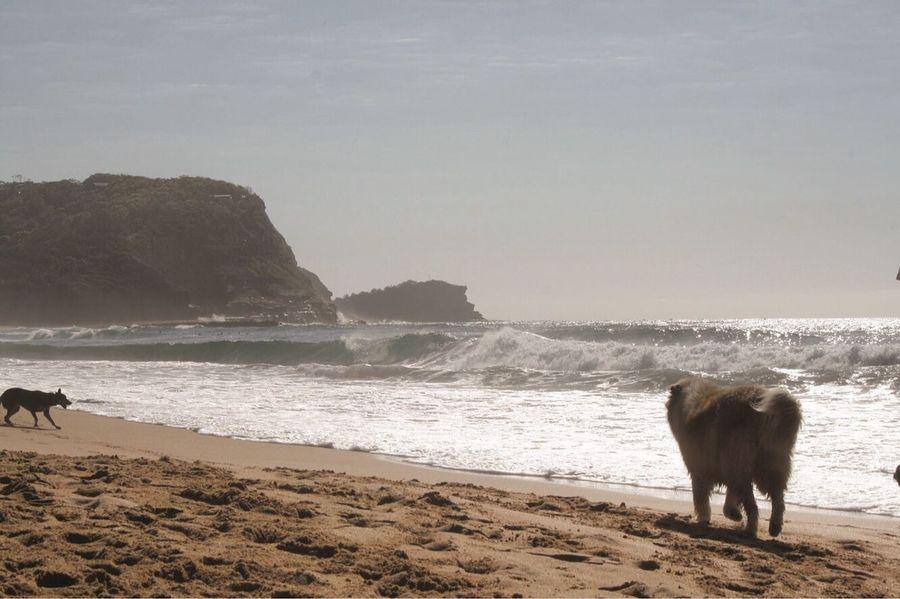 Land Water Mammal Sea Beach Animal Themes Animal