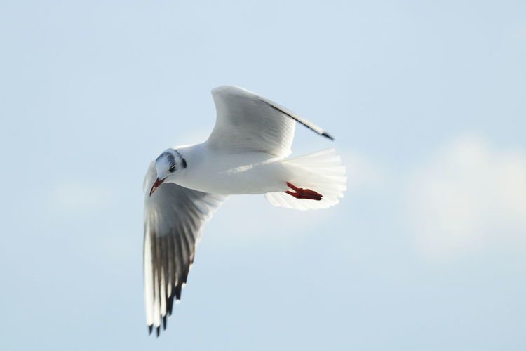 Seagulls Adriatic Sea Animal Themes Animals In The Wild Bird Day Flying Giovinazzo Mid-air Nature No People One Animal Outdoors Sky Spread Wings