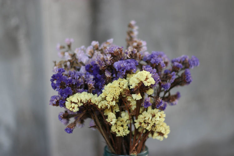 Beauty In Nature Blooming Close-up Day Flower Flower Head Focus On Foreground Fragility Freshness Growth Nature No People Outdoors Petal Plant Purple