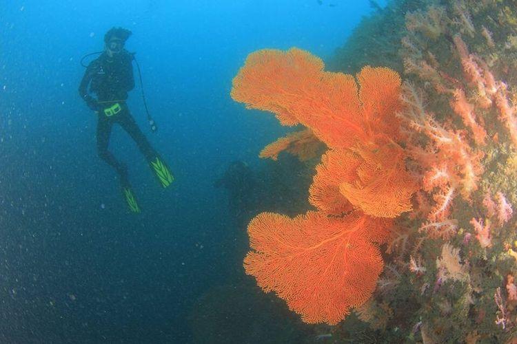 Diving Sea Fan