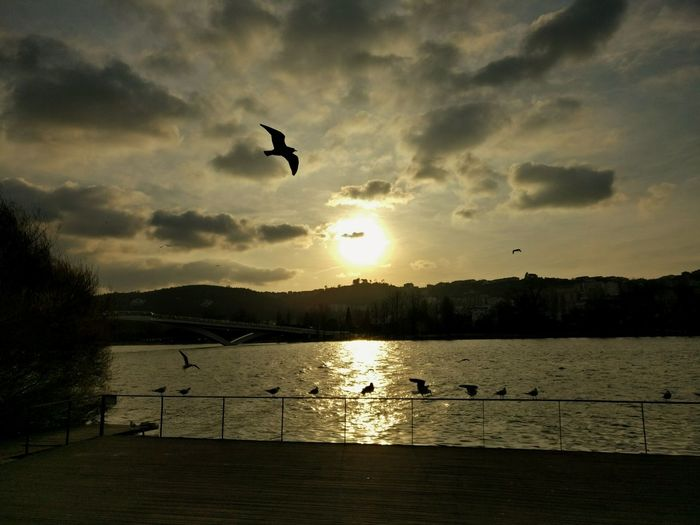 Evenings by the Mondego RiverEyeEmNewHere Wings Spread Water Bird First Eyeem Photo Coimbra Portugal Wanderlust