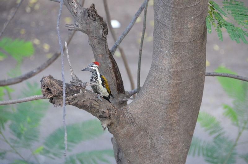 Woodpecker bird perching on tree trunk