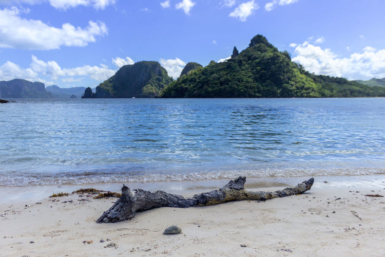 Driftwood On Shore With Mountains In Background