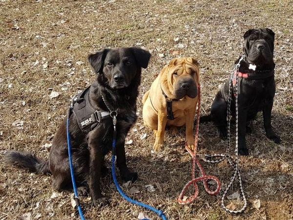 Dog Pets Sand Domestic Animals Animal Themes Mammal Outdoors
