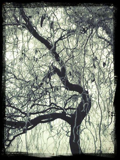 tree in winter :)