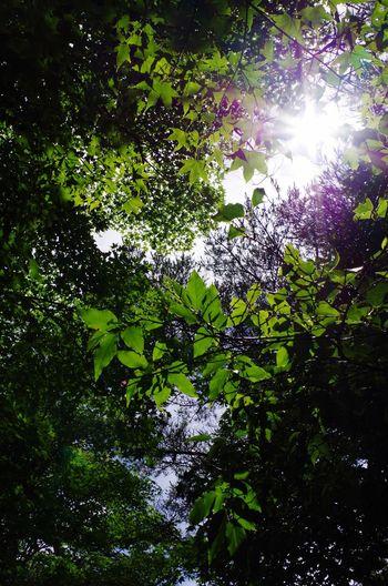 Green Natur えびの