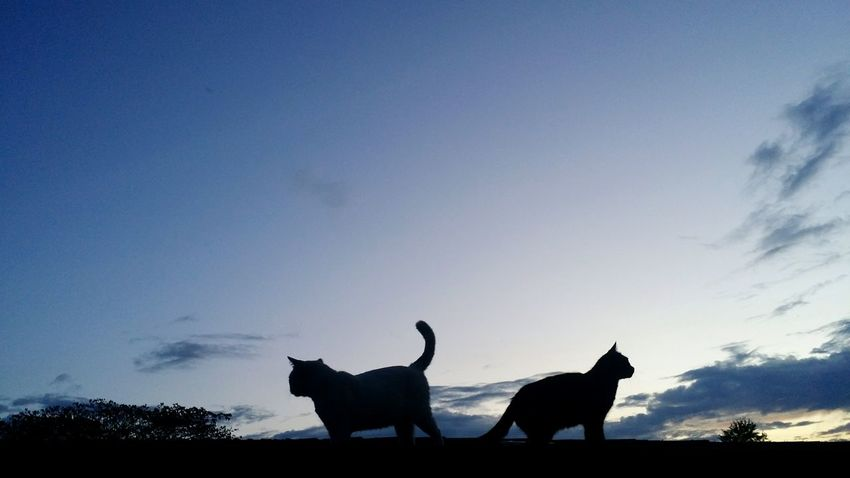 Silhouette Animal Animal Wildlife Animals In The Wild Sky Animal Themes Outdoors