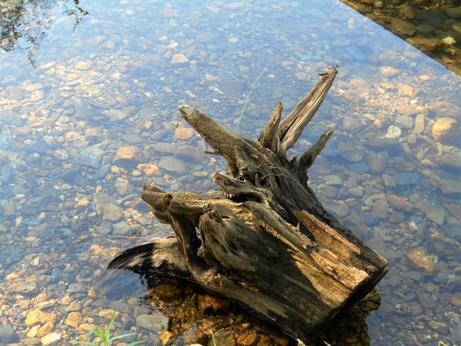 Beauty In Nature Close-up Day Nature No People Outdoors Reflection Scenics Water Wood - Material Wooden Post